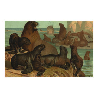 Vintage Seelöwen auf dem Strand, Marinelebens-Tier Poster