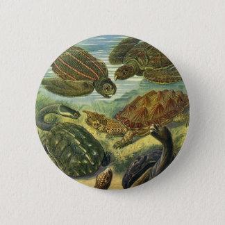 Vintage Seeschildkröte-Land-Schildkröte durch Runder Button 5,7 Cm
