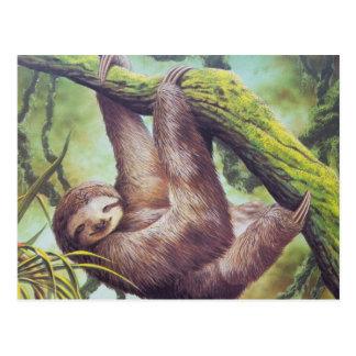 Vintage Sloth-Illustration Postkarte