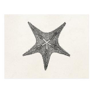 Vintage Starfish-Antiken-Stern-Fisch-Schablone Postkarte