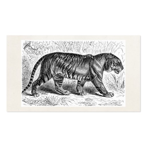 Vintage Tiger-Illustrations-wilde Tiger-Schablone Visitenkarten Vorlage
