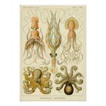 Vintage Tintenfisch-Krake Gamochonia durch Ernst H Posterdruck