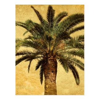 Vintage tropische Palme Postkarte