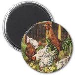 Vintage Vieh, Hahn, Hennen, Hühner Kühlschrankmagnet