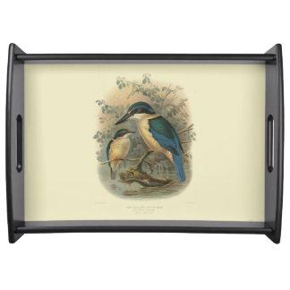 Vintage Vögel der Wissenschafts-NZ - Eisvogel Tablett
