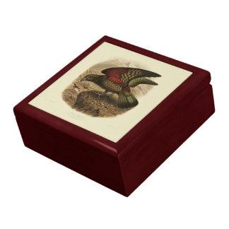 Vintage Vögel der Wissenschafts-NZ - Kea Erinnerungskiste