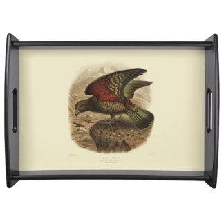 Vintage Vögel der Wissenschafts-NZ - Kea Tablett