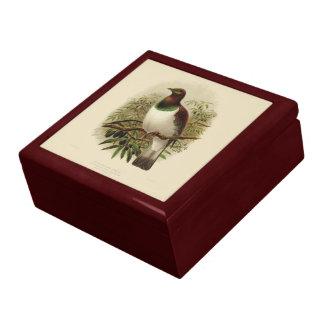 Vintage Vögel der Wissenschafts-NZ - Kereru Geschenkbox