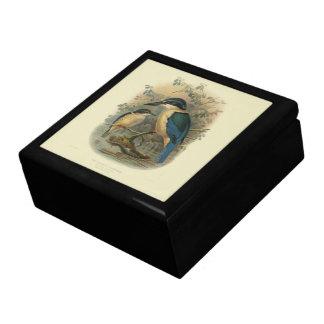 Vintage Vögel der Wissenschafts-NZ - NZ Eisvogel Schmuckschachtel