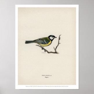 Vintage Vogel-Illustration - der große Tit Poster