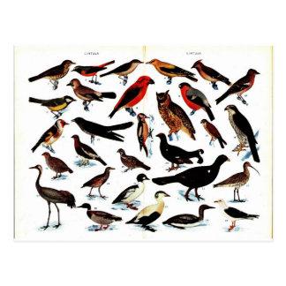 Vintage Vogel-Illustration Postkarten