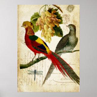 116 vogel mit haube kunst poster zazzle. Black Bedroom Furniture Sets. Home Design Ideas