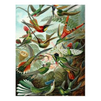 Vintage Vögel Postkarte