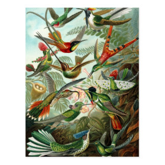 Vintage Vögel Postkarten