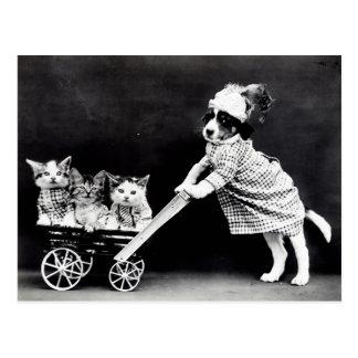 Vintage Welpen und Kätzchen-Postkarte Postkarten