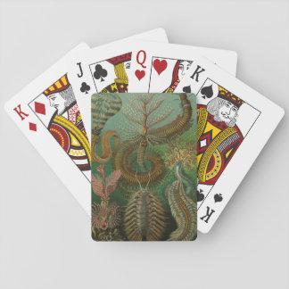 Vintage Wurm-Ringelwürmer Chaetopoda durch Ernst Spielkarten