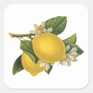 Vintage Zitronen-Illustration Quadratischer Aufkleber