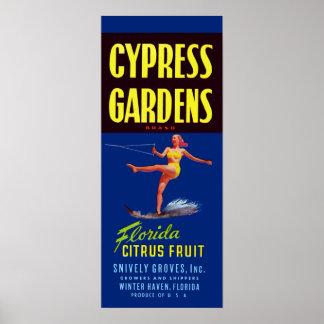 Vintage Zypresse arbeitet Florida-Zitrusfrucht im Poster