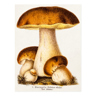 Vintager 1800s Pilz-essbare Pilz-Schablone Postkarte