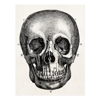 Vintager 1800s Schädel-Retro Schädel Skeleton Postkarten