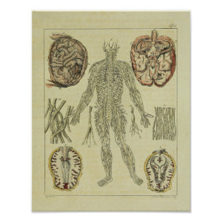 Vintager 1820 Nerven-Gehirn-Anatomie-Kunst-Druck Poster