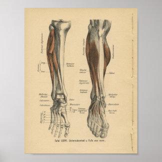 foot anatomy poster designs. Black Bedroom Furniture Sets. Home Design Ideas