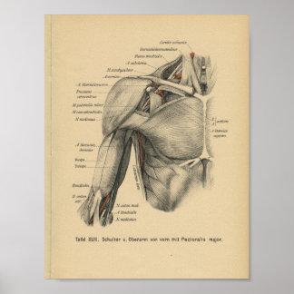 Vintager 1888 Deutsch-Anatomie-Druck-Schulter-Arm Poster