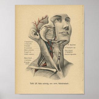 Vintager 1888 Deutsch-Anatomie-Schreibkopf-Hals Poster