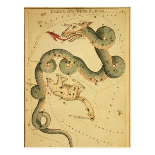 Vintager Astronomiedruck Draco u. Ursa Minderjähri Postkarten