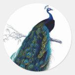 Vintager blauer eleganter bunter Pfau Runder Aufkleber