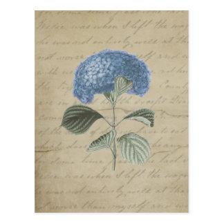 Vintager blauer Hydrangea mit antiker Kalligraphie Postkarte