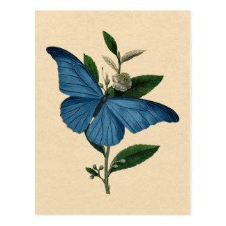 Vintager blauer Schmetterling Postkarte