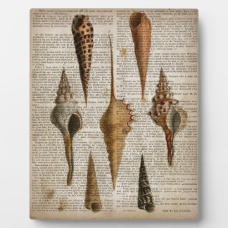 Vintager botanischer Seashell Druck des Fotoplatte