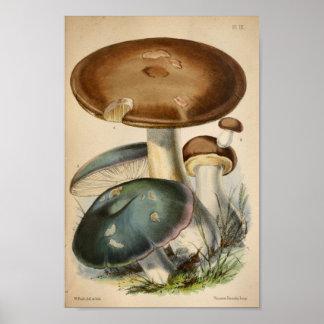 Vintager Brown-Blau-Pilz-Kunst-Druck 1863 Poster