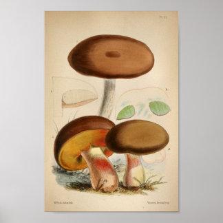 Vintager Brown-Kappen-Pilz-Kunst-Druck 1863 Poster