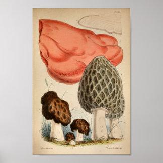 Vintager Brown-Rot-Pilz-Kunst-Druck 1863 Poster