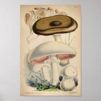 Vintager Brown-Weiß-Pilz-Kunst-Druck 1863 Poster
