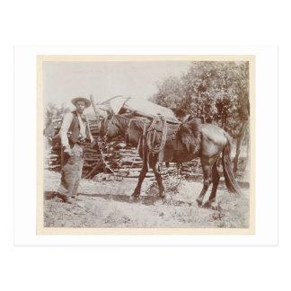Vintager Cowboy 1900 Postkarte