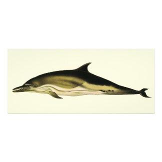 Vintager DelphinDelphinus Delphis, Werbekarte