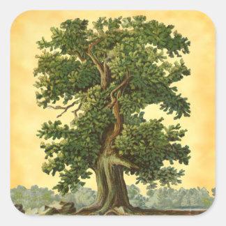 Vintager Eichen-Baum auf Quadratischer Aufkleber
