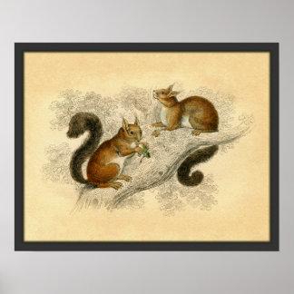 Vintager Eichhörnchen-Druck Plakat