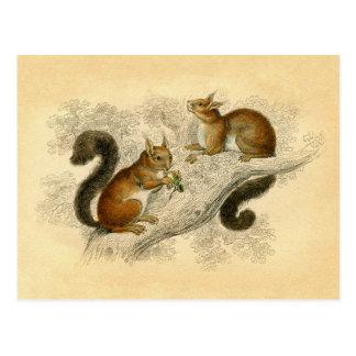 Vintager Eichhörnchen-Druck Postkarte