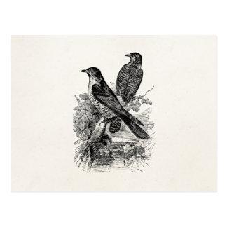 Vintager europäischer Kuckuck-Vogel-personalisiert Postkarten