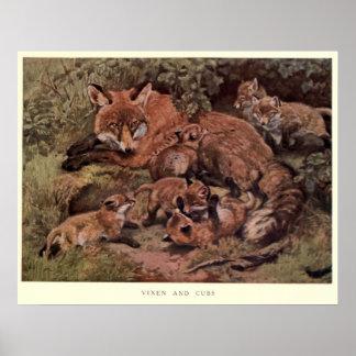 Vintager Fox und Kuba Painting (1909) Poster