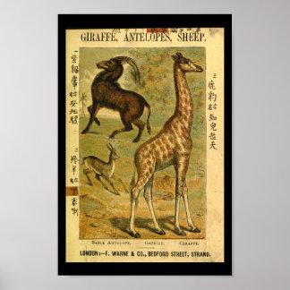 Vintager Giraffen-Gazellen-Naturgeschichte-Druck Poster