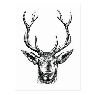 Vintager Hirsch-oder Rotwild-Kopf mit den Geweihen Postkarte