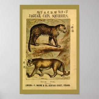Vintager Jaguarpuma-Katzen-Naturgeschichte-Druck Poster