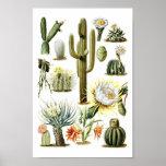 Vintager Kaktus-botanisches Illustrations-Plakat Poster