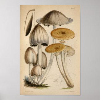 Vintager Kappen-Pilz-Kunst-Druck 1863 Browns Poster