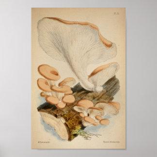Vintager Klotz-Pilz-Kunst-Druck 1863 Browns weißer Poster